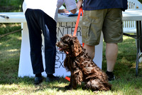 FI_641 - Boykin Spaniel Event - Boykin Spaniel Club of Texas
