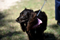 FI_656 - Boykin Spaniel Event - Boykin Spaniel Club of Texas