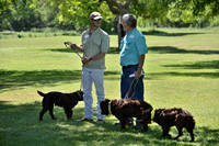 FI_681 - Boykin Spaniel Event - Boykin Spaniel Club of Texas